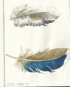 AAJ Day 1 - Feathers