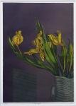 nancy_power_tulips